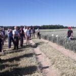 Tre Vigtige Forhold Til Valg Af Efterårets Hvedesorter