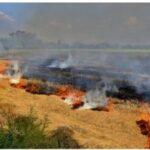 VKST Melder Ud: Harvning Af Brandbælter Er Et Must Lige Nu – Også Selvom Det Er Imod Reglerne