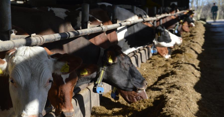 Overraskende Flotte Regnskabstal For Mælkeproducenter